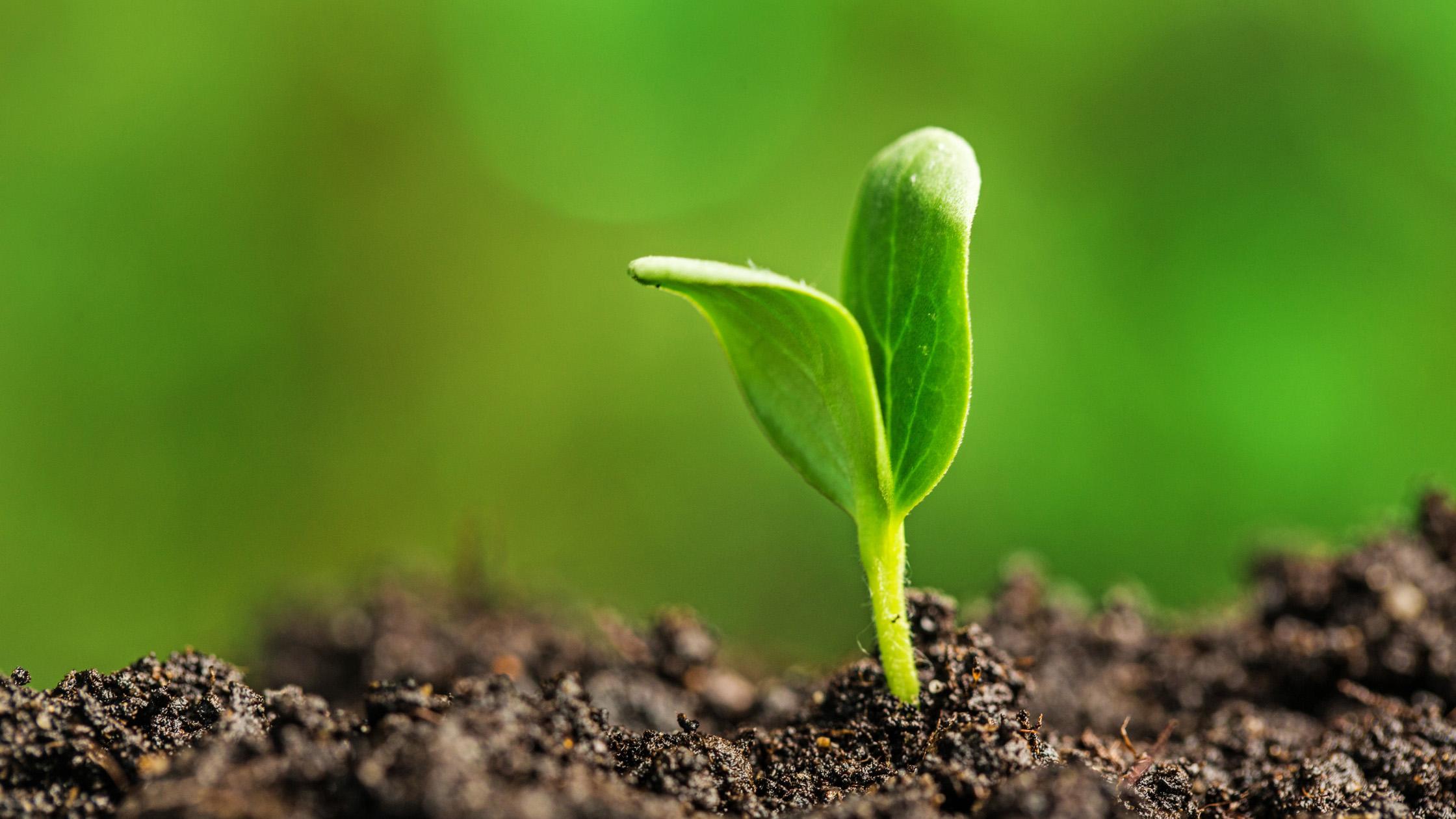 Växtskott i jord